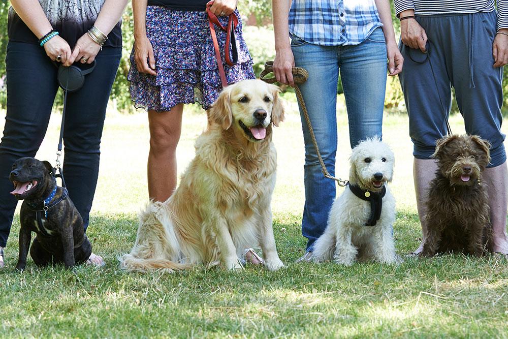 Cours d'éducation canine par Anima'Pattes dans le Tarn