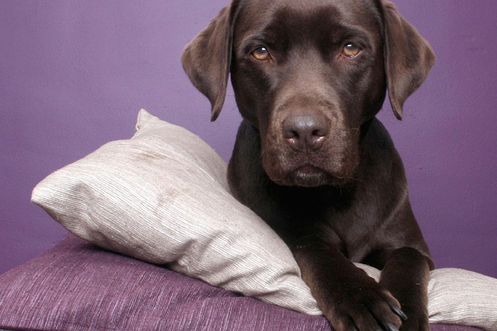 Halte garderie de vacances pour chien